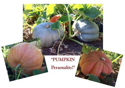 kl-10-01-16 pumpkinsphotos