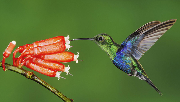 Birds, Bees & Butterflies