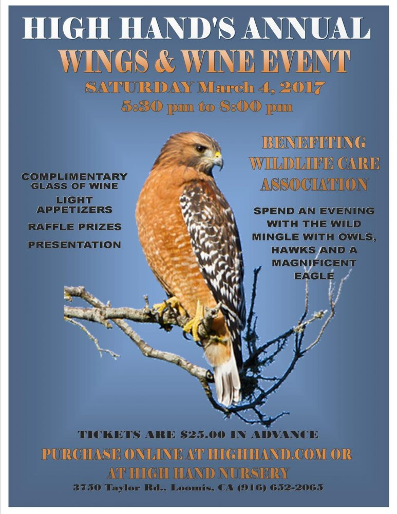 image of wings & wine event flyer