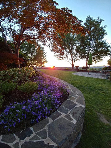 03360809aa9ce The sun going down at Maple Rock last night highlighted one of my favorite  landscape plants, Campanula. Its purple flowers bloom most of the summer. I  find ...